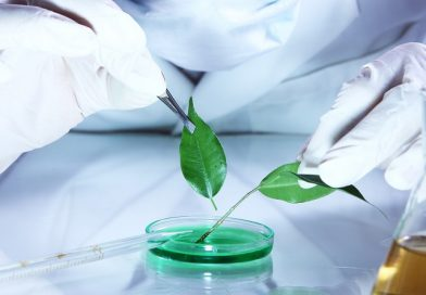 Estágio: Biomedicina, Ciências Biológicas e Farmácia
